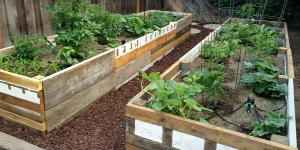 reclaimed pallet wood recycled into raised vegetable beds