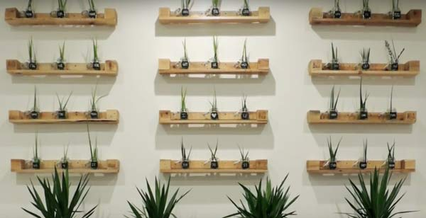 pallets recycle into plant shelves
